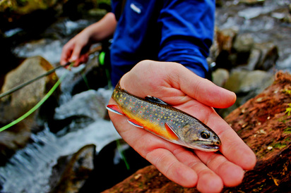 Interview with the smoky mountain angler fly fishing in for Smoky mountain trout fishing